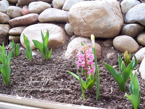 Tulips_edited-1
